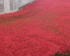 Each poppy commemorates a military British and Commonwealth life lost in WWI